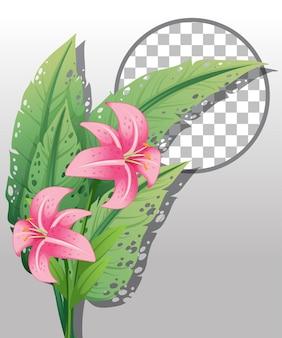 Giglio rosa con cornice rotonda trasparente