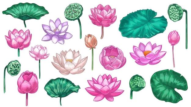 Loto rosa. la ninfea fiorisce il loto rosa e le foglie verdi, il bellissimo giardino botanico della pianta di fioritura, l'insieme di vettore di colore dell'elemento floreale tropicale. illustrazione fiore di loto fiore, petalo floreale orientale