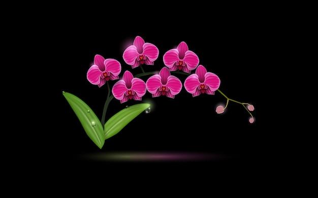 Un'orchidea rosa fiorisce sul nero