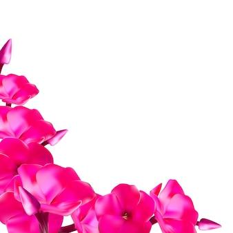 Illustrazione di vettore di fiori di flox rosa eps10