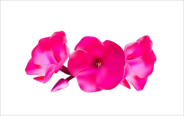 Phlox rosa fiori illustrazione vettoriale eps10