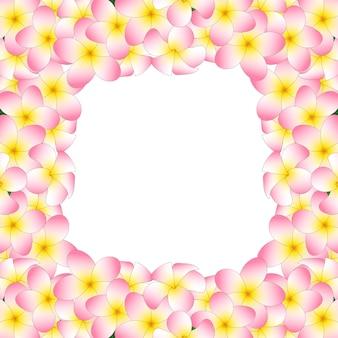 Confine di plumeria rosa