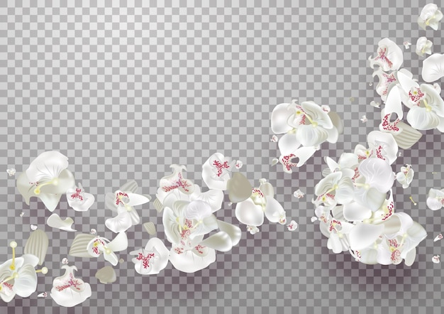 Petali di caduta rosa sakura su sfondo trasparente