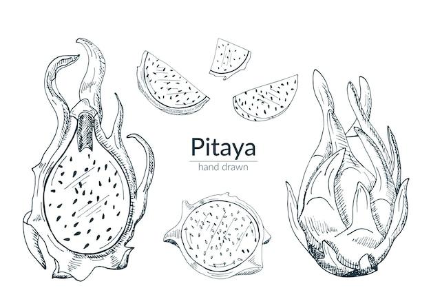 Pitaya intera, tagliata, metà. un insieme di elementi isolati in bianco e nero. schizzo.