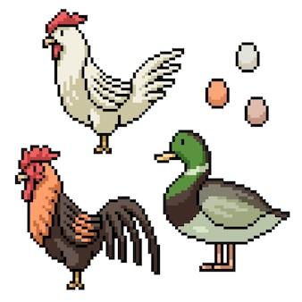 Pixel art di uovo di anatra di pollo