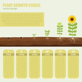 Fasi di crescita delle piante