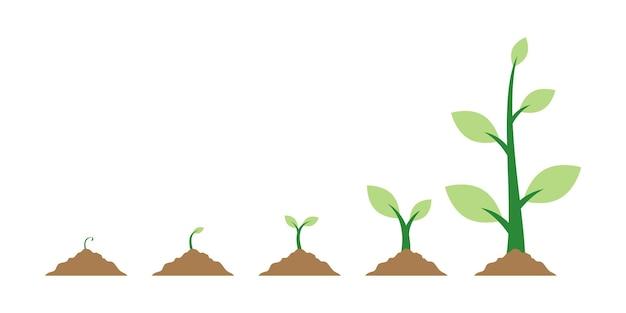 Illustrazione di vettore di crescita delle piante di semi di piante su sfondo bianco