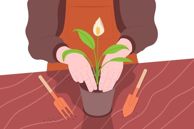 Piantare fiori da giardino. giardinaggio, agricoltura, hobby e lavoro agricoltore. immagine del primo piano di un giardiniere che ripianta i fiori in un vaso di fiori. piatto del fumetto delle mani che tengono una pianta.