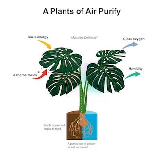 A piante di purificazione dell'aria. illustrazione che mostra incredibili piante che possono trasformare le radici in sostanze tossiche in nutrienti alimentari per la crescita.