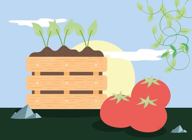 Piante che coltivano e pomodori