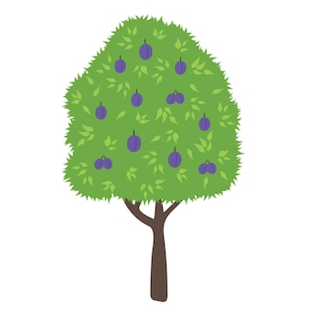 Albero di prugne. fumetto piatto albero da frutto verde. simbolo del giardino biologico colorato semplice. illustrazioni vettoriali isolate.