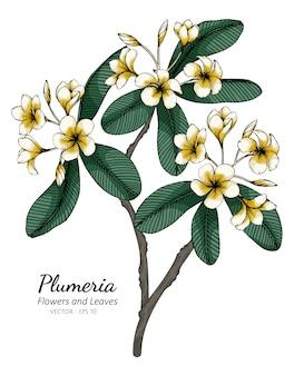 Illustrazione del disegno del fiore e della foglia di plumeria con la linea arte sugli ambiti di provenienza bianchi.