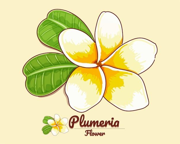 Fiore di plumeria con due foglie illustrazione disegnata a mano