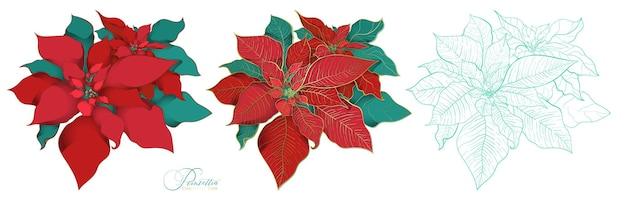 Poinsettia in un elegante stile decorativo. foglie rosse e verdi