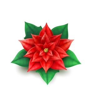 Illustrazione della decorazione del fiore della stella di natale
