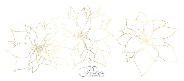 Infiorescenza di poinsettia in un'elegante linea dorata. elementi per le decorazioni delle feste di natale e capodanno.