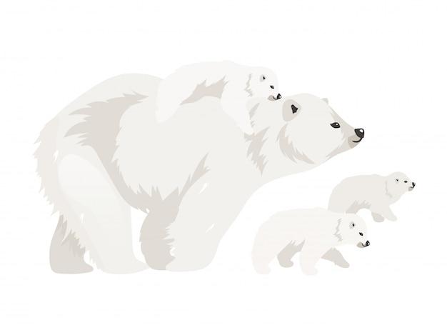 Illustrazione di colore piana della famiglia dell'orso polare. cuccioli ambulanti della creatura adulta selvaggia nordica. mammifero marino madre con bambino. personaggi dei cartoni animati isolati animale artico su fondo bianco