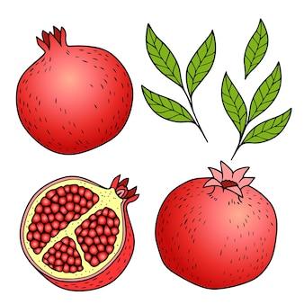 Illustrazione variopinta del melograno