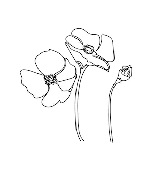 Fiori di anemone di papavero una linea arte disegno a tratteggio continuo di piante fiori di erbe in fiore