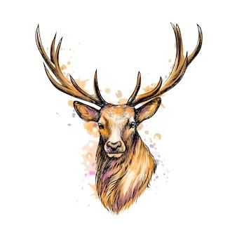 Ritratto di una testa di cervo da una spruzzata di acquerello, schizzo disegnato a mano. illustrazione di vernici