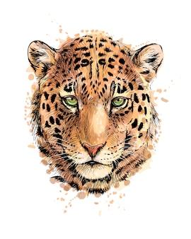 Ritratto di una testa di leopardo da una spruzzata di acquerello, schizzo disegnato a mano. illustrazione vettoriale di vernici