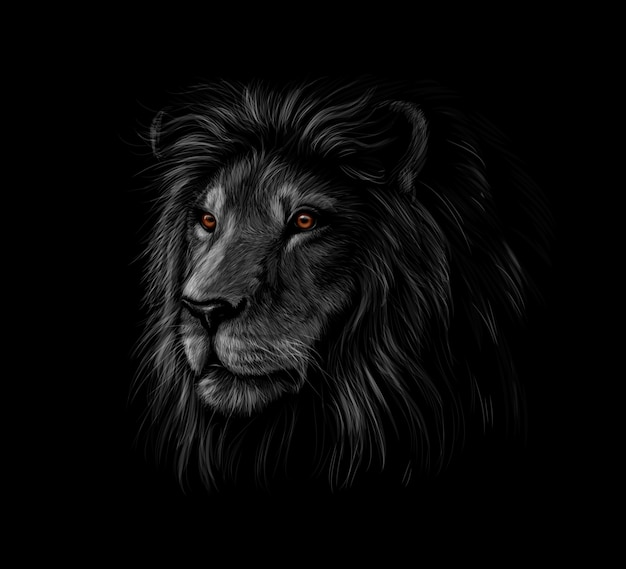 Ritratto di una testa di leone su sfondo nero. illustrazione vettoriale