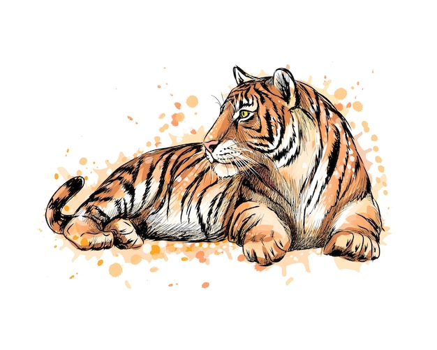 Ritratto di una tigre sdraiata da una spruzzata di acquerello, schizzo disegnato a mano. illustrazione di vernici