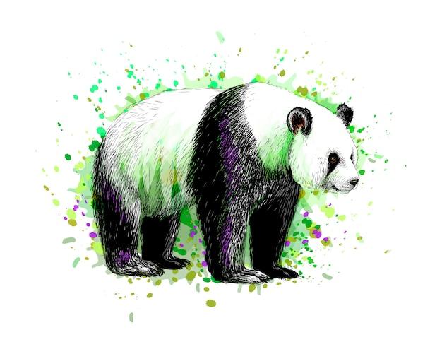 Ritratto di un orso panda da una spruzzata di acquerello, schizzo disegnato a mano. illustrazione vettoriale di vernici