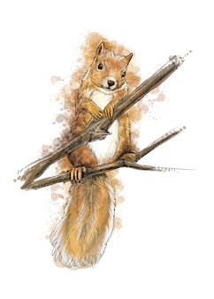 Ritratto di uno schizzo disegnato a mano di scoiattolo con spruzzata di acquerelli illustrazione