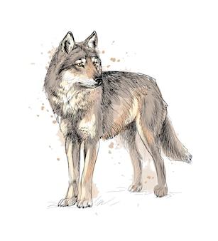 Ritratto di un lupo da una spruzzata di acquerello, schizzo disegnato a mano. illustrazione di vernici