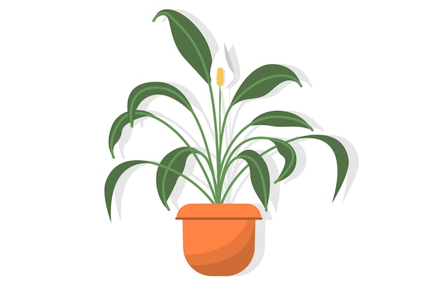 Spathiphyllum di pianta d'appartamento in vaso con delicati fiori bianchi con macchie decorative, noto anche come giglio pacifico o felicità femminile, isolato su sfondo bianco