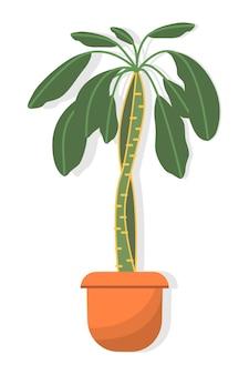 Palma di euforbia in vaso di piante d'appartamento, nota anche come euforbia con foglie verdi e uno stelo spesso in vaso marrone, isolato su sfondo bianco