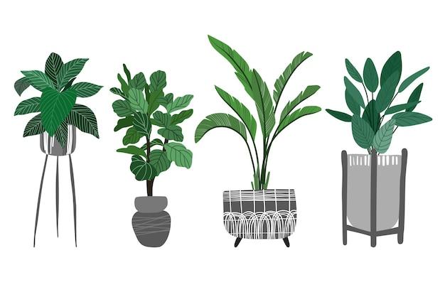 Collezione di piante in vaso tra cui ficus lyrata e banana
