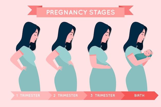 Illustrazione di fasi di gravidanza