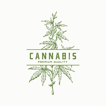 Segno astratto di cannabis di qualità premium, simbolo o modello di logo. ramo di canapa verde disegnato a mano con foglie schizzo sillhouette con retro tipografia. emblema di erbe di medicina di lusso vintage.
