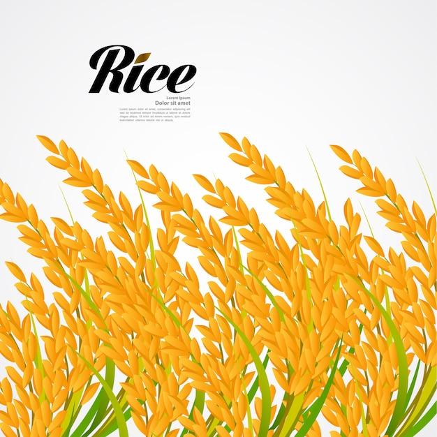 Premium rice concetto di design di grande qualità