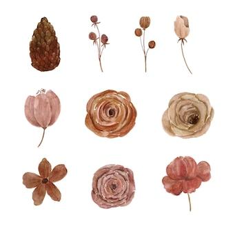 Illustrazione dell'acquerello dell'elemento floreale essiccato piuttosto estetico