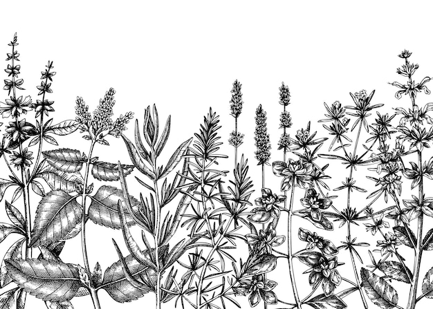Sfondo di erbe di provenza disegno di piante aromatiche e medicinali abbozzato a mano