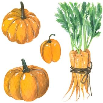 Zucche arancia peperone e carote illustrazione ad acquerello vettore isolato elementi