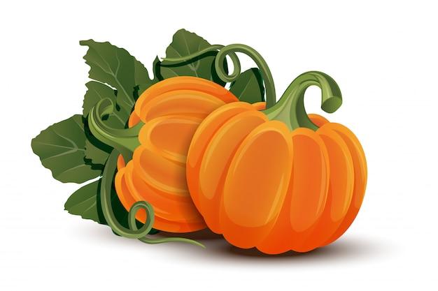 Zucche con foglie su sfondo bianco. zucca arancione matura - zucca per halloween, festival del raccolto autunnale o giorno del ringraziamento. verdure ecocompatibili.