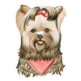 Cane più terier del cucciolo yorkshire sveglio con l'illustrazione dell'acquerello del nastro