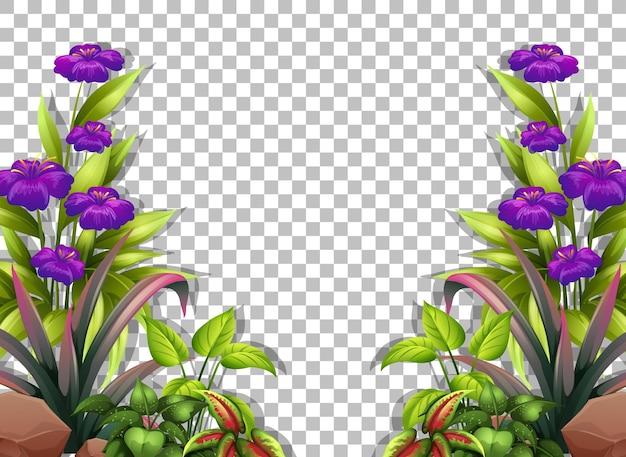 Modello di cornice di fiori viola su sfondo trasparente