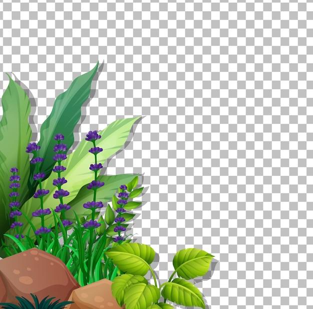 Campo di fiori viola su sfondo trasparente