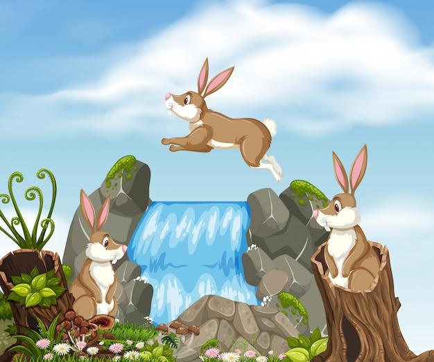 Coniglio nella bellissima natura
