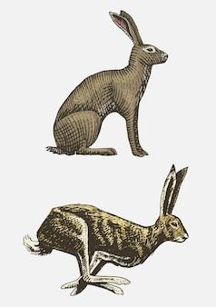 Coniglio o lepre seduto e in esecuzione disegnati a mano, incisi animali selvatici in stile vintage o retrò, set di zoologia europeo