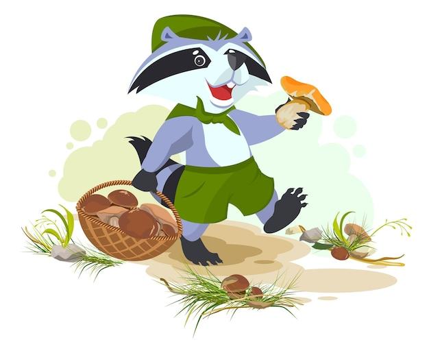 Raccoon scout raccoglie funghi. raccoglitrice di funghi con cestello.