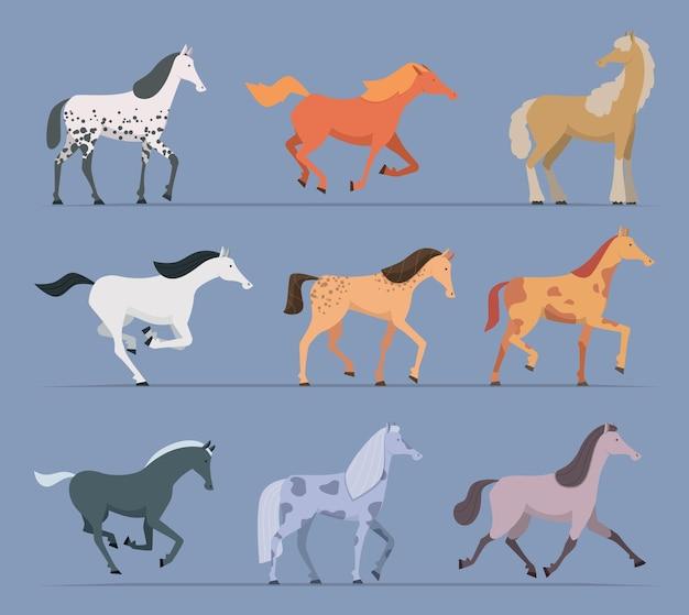 Cavalli da corsa che camminano e saltano