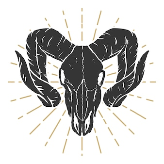 Illustrazione del cranio di ariete. elementi per etichetta, segno, logo, poster. illustrazione