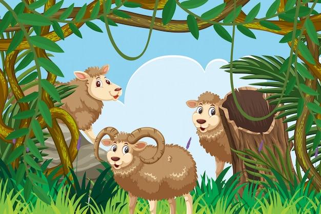 Ram nella scena della giungla