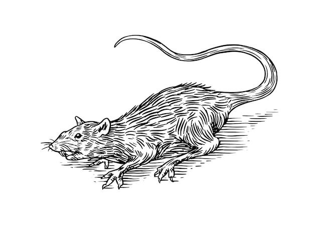 Ratto o topo animale selvatico inciso a mano disegnato nel vecchio stile vintage di schizzo